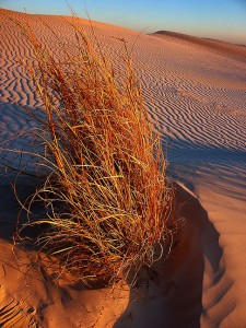 Gypsum dunes and grass, Guadalupe Mountains National Park, April 2003; I had this area of the park to myself, and as the sun set, I made a number of images that told the story. Still, this didn't make the top five.