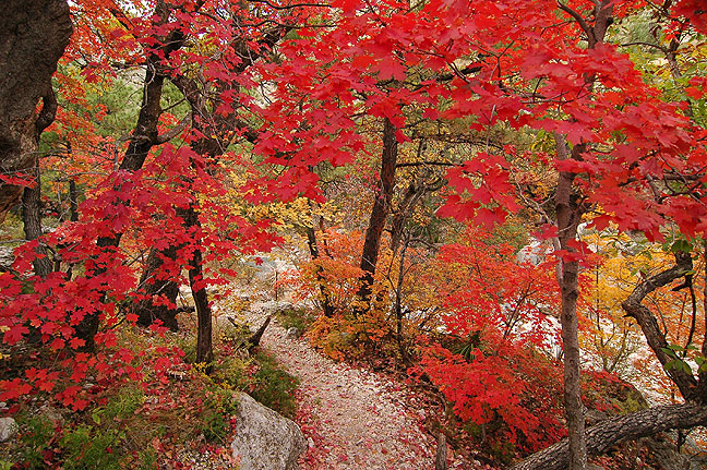 Devil's Hall trail, Guadalupe Mountains National Park, November 2006; this image gets a lot of ooas and aaahs when I show it to my students, and it certainly is beautiful, but it's not quite a top five image.