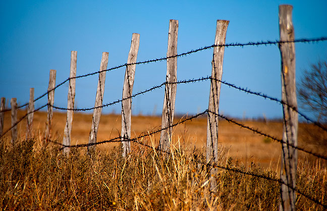 Warm light accentuates the color of the fence I followed west into a pasture. I shot this at 250mm.