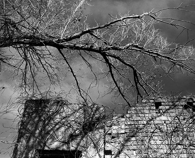 Wall, branches and vines, Byars, Oklahoma, December 1999, made on 6x7 Verichrome Pan Film with a deep orange filter.