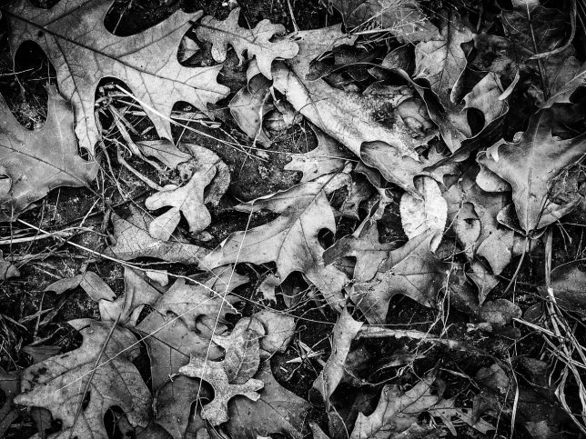 The muted light creates a deeply moody image of these leaves on the ground in the woods.