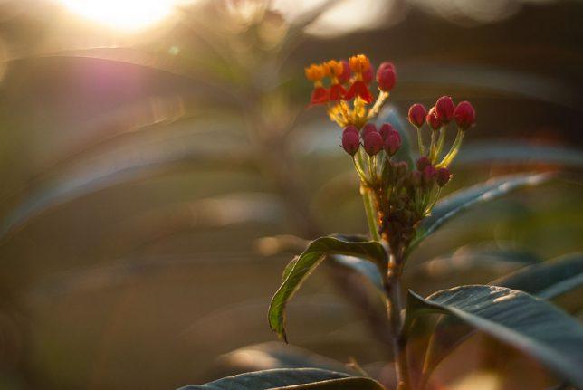 Flowers catch last light in the garden.