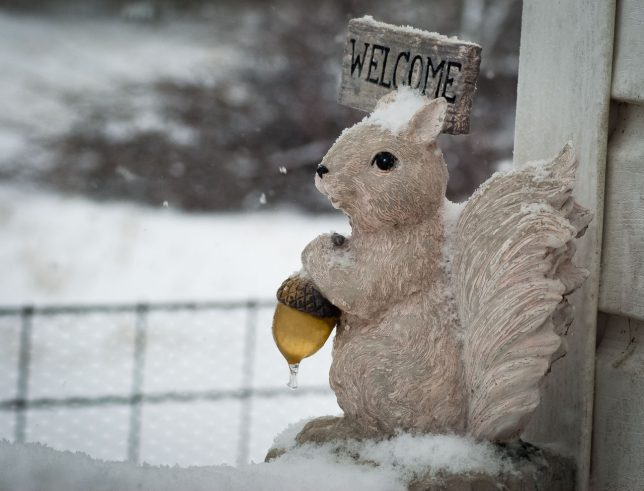 Abby's squirrel statue keeps watch keeps watch during a snowstorm this morning.