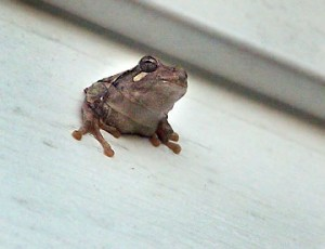 The frog that appeared in the hole in the siding