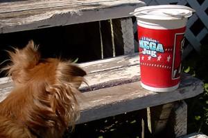 """Sierra looks over the KFC """"Mega Jug"""""""