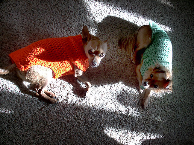 What could be better than to be Abby's Chihuahuas, dressed in Abby's hand-made sweaters, sitting in the sun on a chilly clear morning?