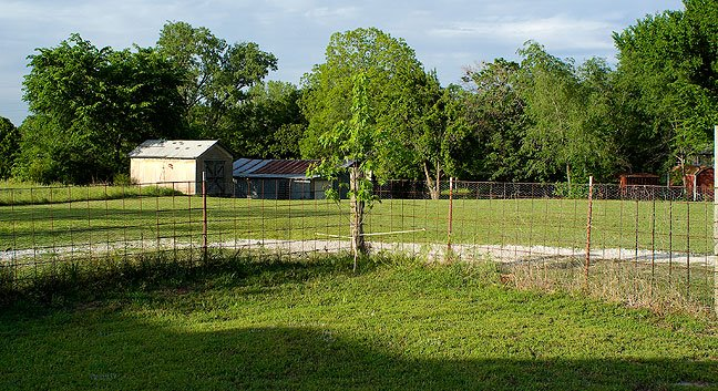 This is a view from our front yard, looking northeast toward the complex of sheds and barns, showing how wonderfully green it has all become.