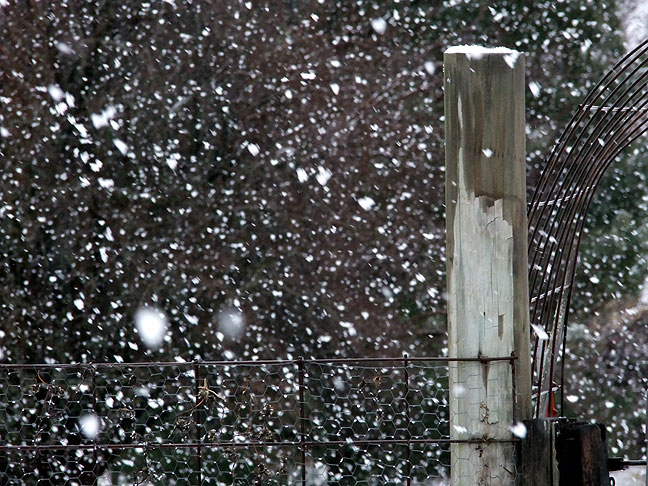 View of fencepost in our front yard in brief, heavy snowfall this morning