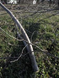 Branches from the Elm tree along the fence in the south pasture; I chain sawed them down one day, and hauled them off the next