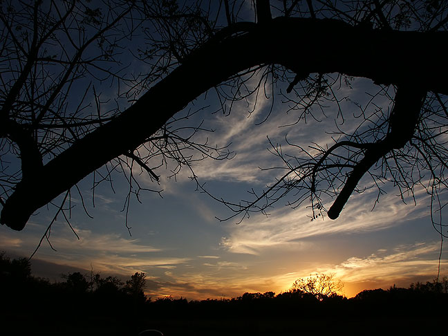 The Oklahoma sky tonight just after sunset, with our old walnut tree framing it.