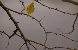 Tree and branches tremble in a light breeze near our pond today.