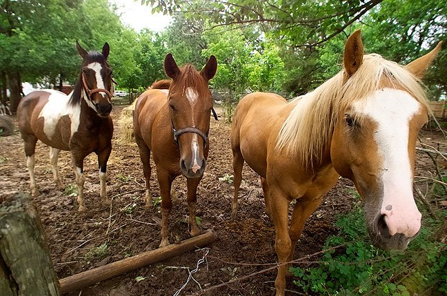 This dream is either the result of these horses looking at me or me eating some multi-grain Cheerios before my nap.