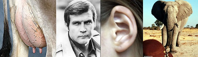 Udder Lee Ear Elephant = Utterly Irrelevant