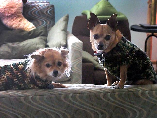 Okay, I mentioned the dogs, and I haven't posted anything of them in a while, so here is an image of Sierra and Max in their Abby-made sweaters last winter.