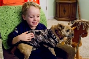 Max the Chihuahua wears one of Abby's homemade sweaters as he sits in Paul's lap.