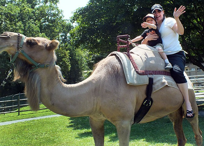 Paul and Chele ride a camel at the Baltimore Zoo during Abby's visit in August 2014.