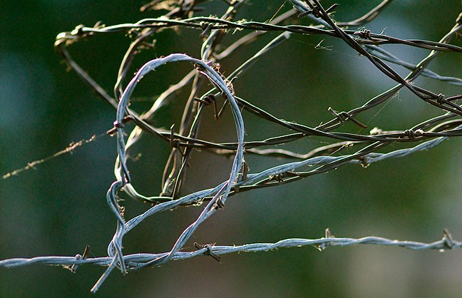 Last light graces the tangle of barbed wire I leave on a post in the south pasture.