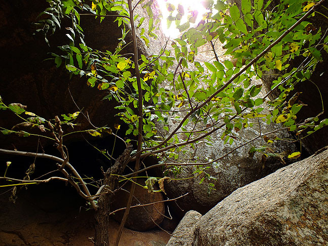 A small tree gathers what sunshine it can as it grown in a cave formed by fallen boulders in the Charon's Garden Wilderness Area of the Wichita Mountains Wildlife Refuge.