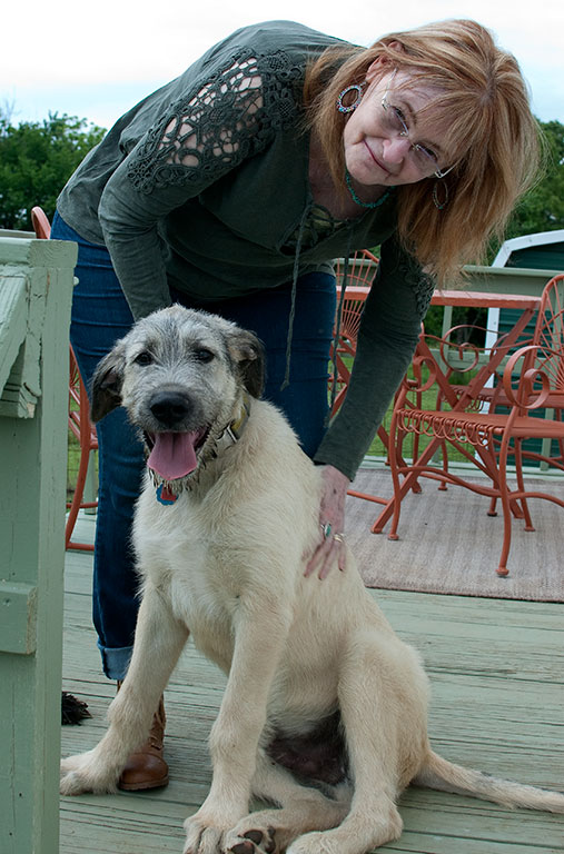 Abby plays with Hawken the Irish Wolfhound puppy.