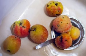 These peaches are ugly, but when I cut off the ugly, they tasted pretty good.