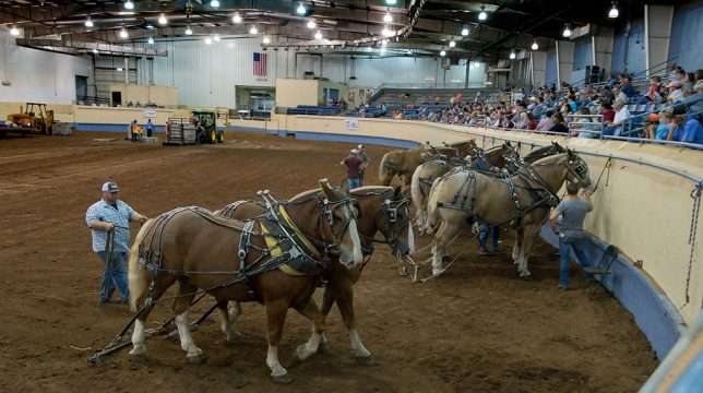 Draft horses and their teamsters prepare to compete in the Performance Arena. Each of these animals weighs as much 1800 pounds.