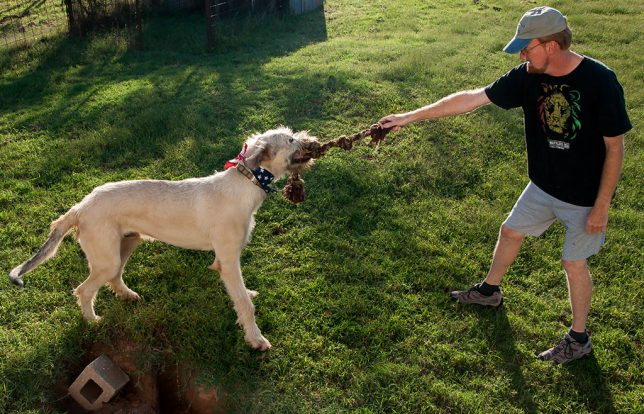 Tug-of-war is a puppy thing, and Hawken, thought huge, is still just 10 months old.