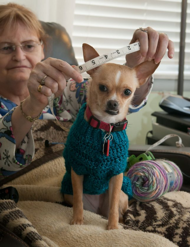Abby measures Summer for a new sweater. We are both amazed at how well this abandoned little dog has fit into our lives.