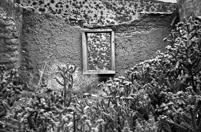 Cholla cactus and eroded wall, Villanueva, New Mexico.