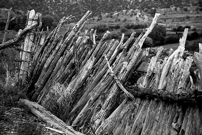 Weathered cattle fence, central New Mexico.