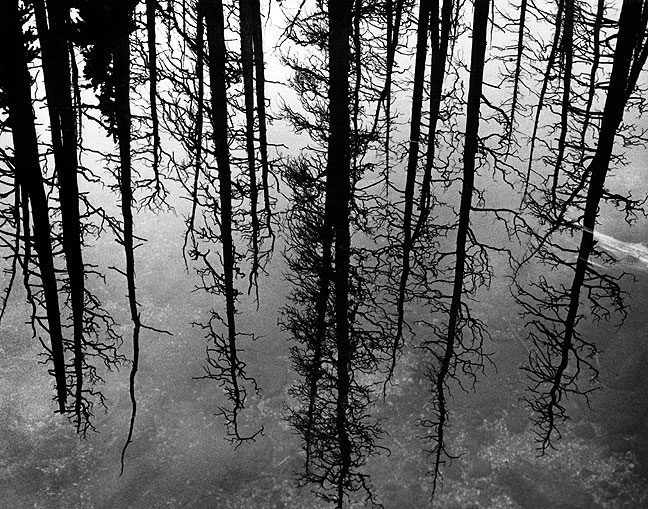 Forest reflected in the water of Lincoln Lake.