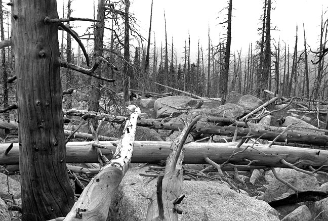 Fallen and burned trees on the Lincoln Lake trail.