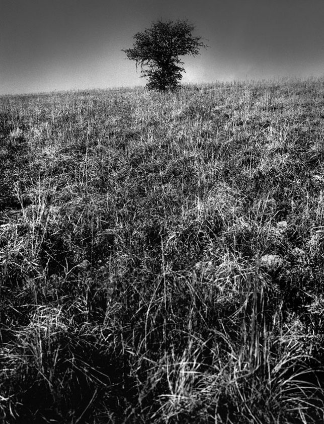 "I made this bold, dramatic view of ""One Tree Hill"" in 1983 on Kodak Technical Pan Film."