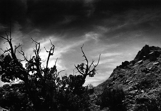 Trees, sky and peaks, afternoon, Palo Duro Canyon.