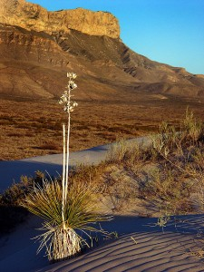 Gypsum Dunes, Guadalupe Mountains National Park