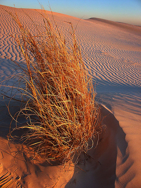 Grass and dunes take on deep colors as sunset approaches.