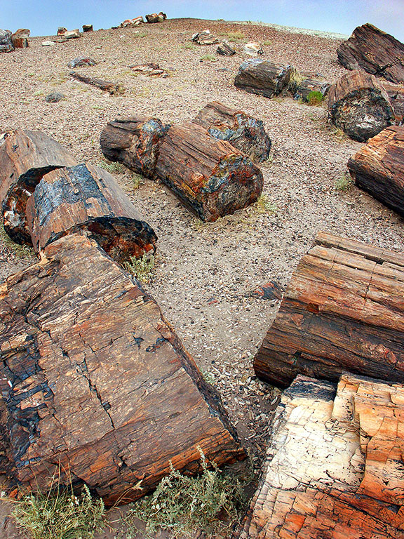 Petrified wood lays strews about at the Petrified Forest.
