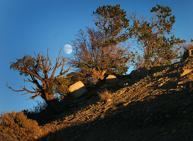 The moon rose behind us as we awaited the golden moment at Angel Peak.