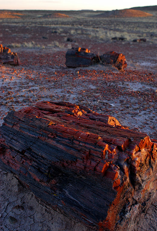 With just a few seconds of daylight remaining, we managed to make this image of petrified wood by the main road at Petrified Forest.