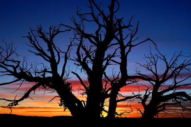 After sunset, I shot this dead tree in The Windows section at Arches National Park.