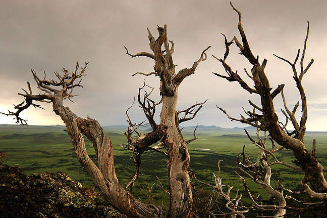 This is another view of the tree on the south rim of Capulin Volcano.