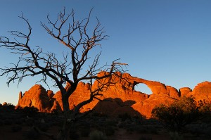 Tree and Skyline Arch as sunset approaches.