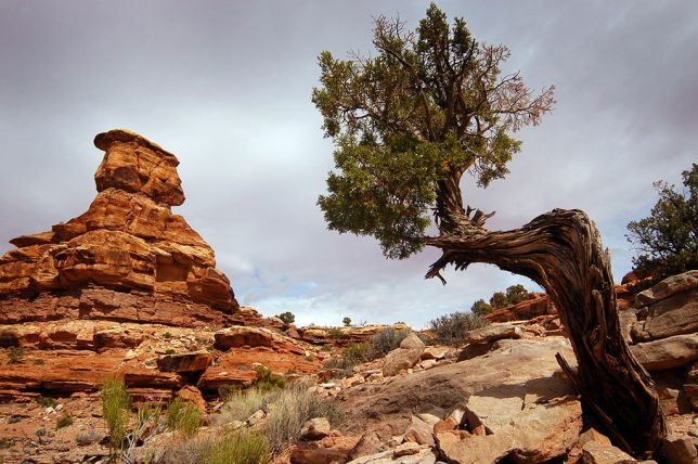A tree clings to a rock outcropping at the Confluence trail head.