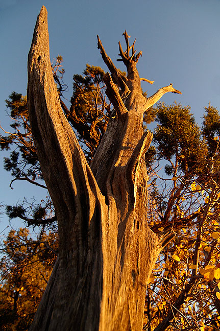 A tree stump takes on sunset light at Square Tower House.