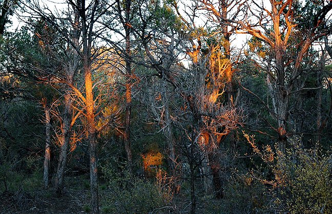 Also on the walk back to the car after seeing Mesa Verde's Square Tower House overlook, Abby made this haunting image of last rays of sun at the edge of the trail.