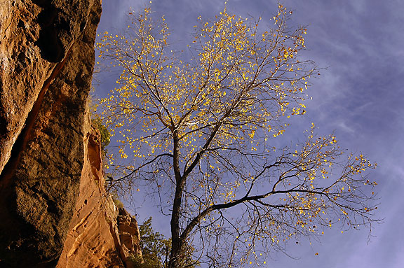 Cliff, Tree and Sky.
