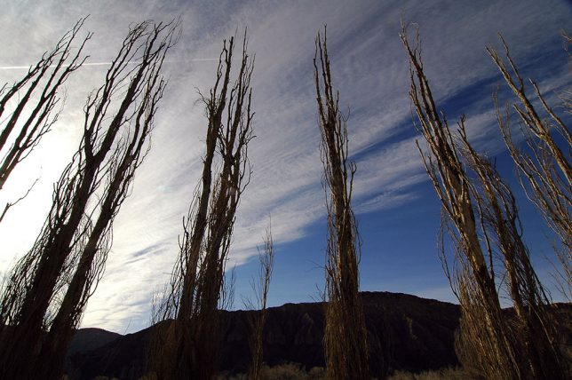 Cottonwoods cling to the banks of the Fremont River near Caineville, Utah.
