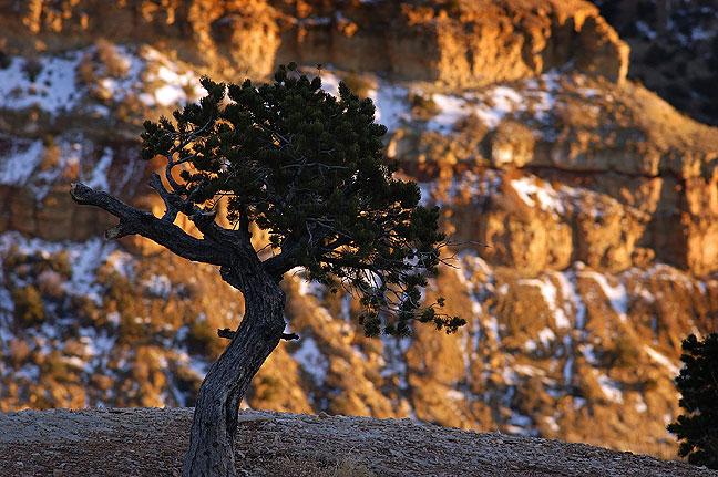 Tree and lingering snow near Eagle Canyon, San Rafael Swell, Utah