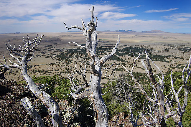 Tree and view to the south, Capulin Volcano National Monument, New Mexico.