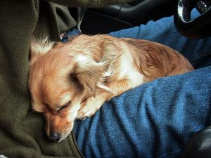 Sierra sleeps soundly in Abby's lap as Abby takes her turn behind the wheel on our 16-hour drive to Monticello, Utah.