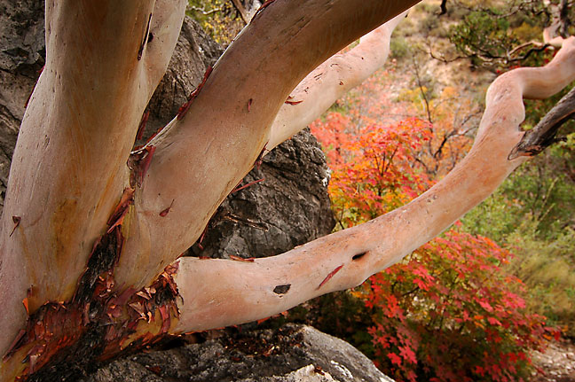 These branches and foliage stretch into the canyon below the Devil's Hall trail.